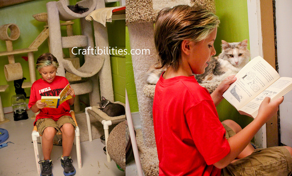 Animal Shelter Rice Socks Giving Back How To Help